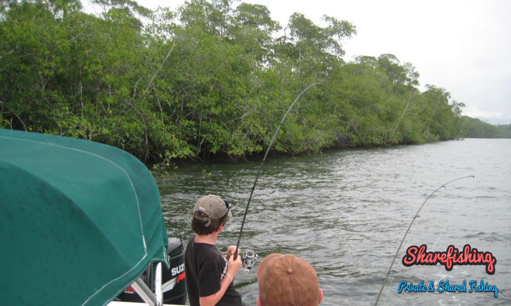 Mangrove Fishing