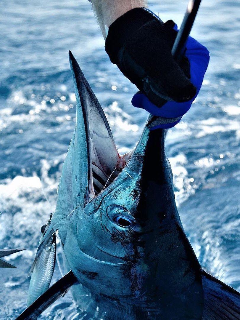 Deep Sea Fishing Costa Rica